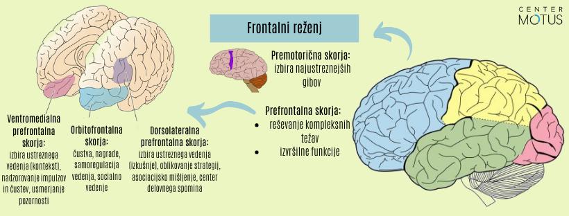 Frontalni možganski reženj - infografika in slikovni prikaz