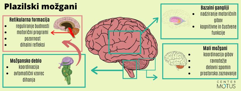 Plazilski možgani v razvoju možganov - infografika in slikovni prikaz