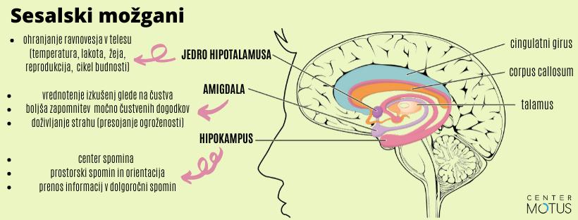 Sesalski možgani, hipotalamus, amigdala in hipokampus