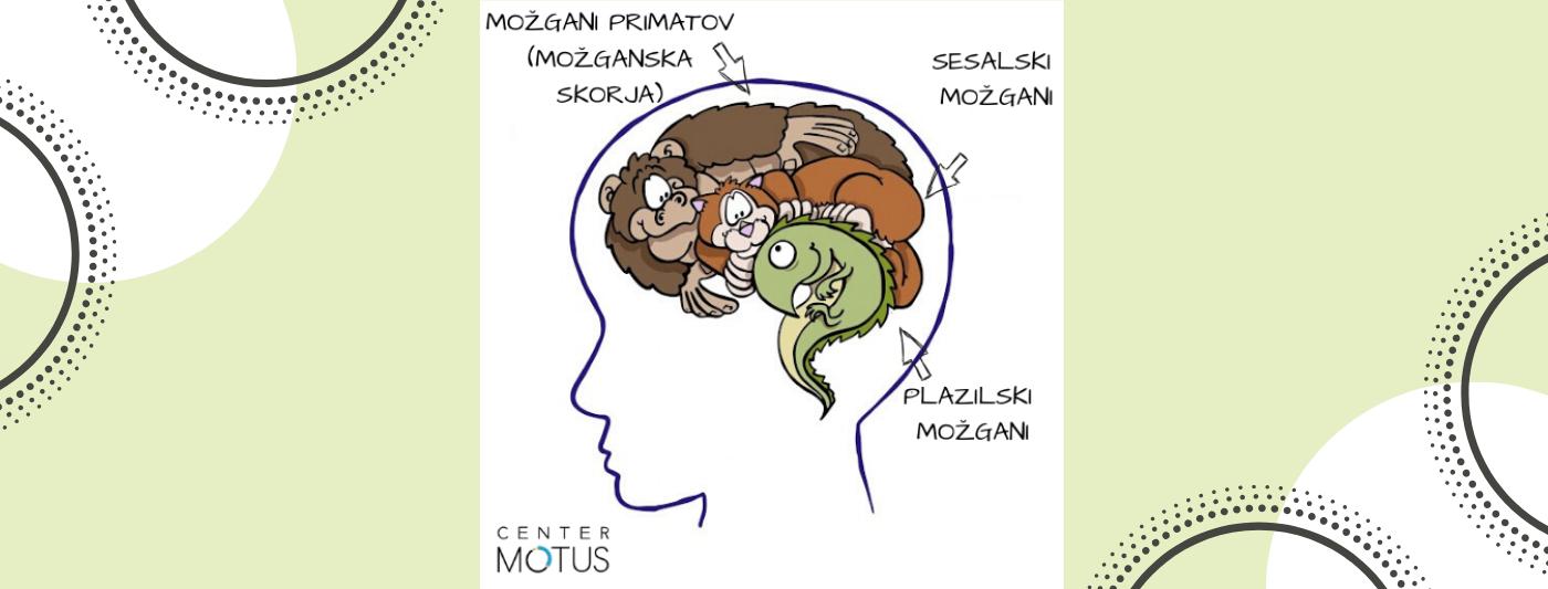 Evolucijski razvoj možganov, kako so se razvili človeški možgani