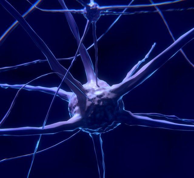 Zrcalni nevroni v človeških možganih